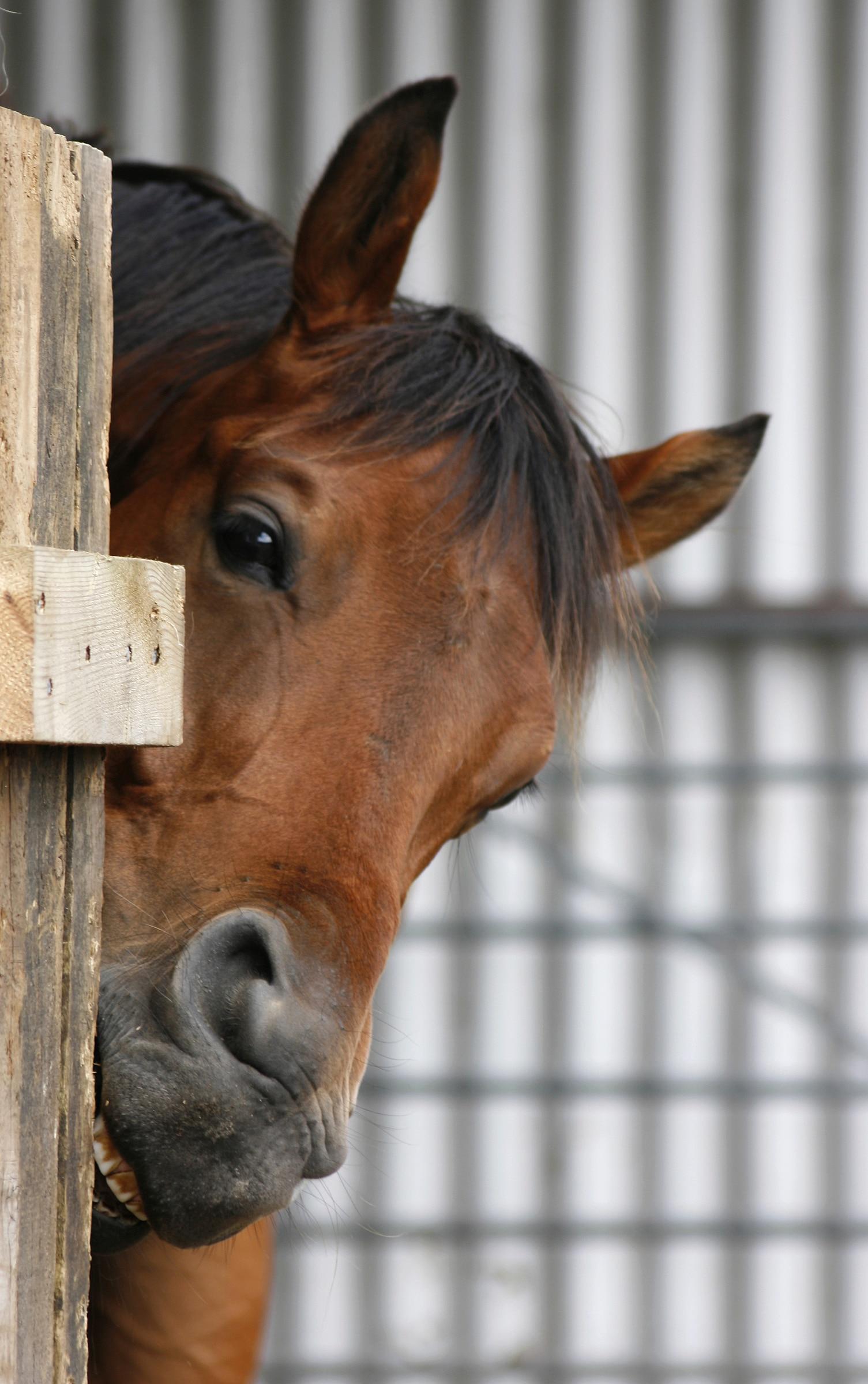 Horse Cribbing />