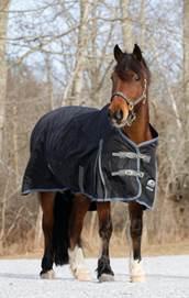 Cushings Horse