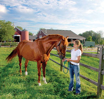 caring for horses In this video becky explains how to take care of a horse she starts by talking about the things that need to be done to the horse on a regular basis trimmi.