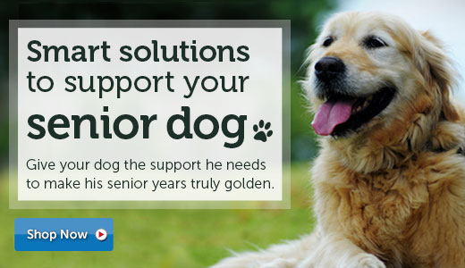 Smart solutions to support your senior dog!
