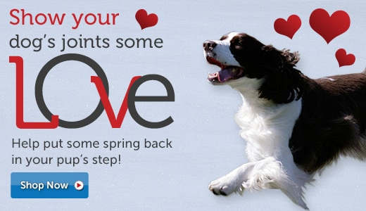 Help put some spring back in your pups step!