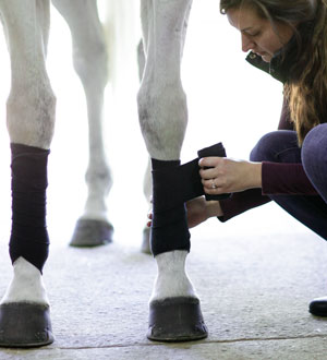 Image of woman putting wrap on a horse