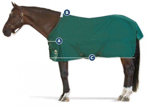 How to tell if your horse's blanket fits: 1. front closure lines up with shoulders 2. not too tight on the withers 3. blanket should be ideal length- not too long or short