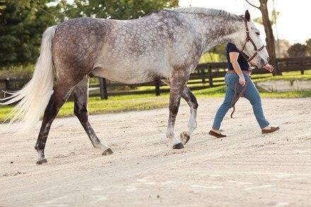 Colitis in Horses