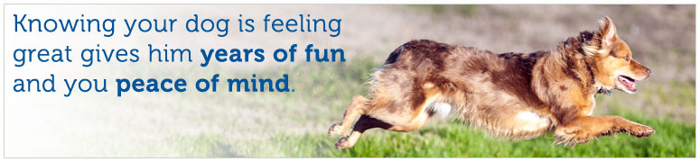 Knowing your dog is feeling great gives him years of fun and you peace of mind.